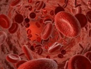 Фармакологическое действие и противопоказания