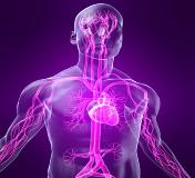 Вегето-сосудистая дистония у взрослых, подростков и детей: симптомы, лечение, чем опасно